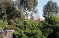 Jardin_des_bambous_c_a_legrain